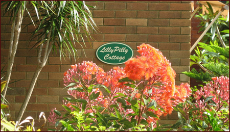 Lillypilly - Accommodation Coffs Harbour