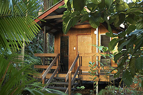 Cape Trib Beach House - Accommodation Coffs Harbour
