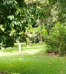 Kingfisher Park Birdwatchers Lodge - Accommodation Coffs Harbour