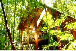 The Canopy Treehouses - Accommodation Coffs Harbour