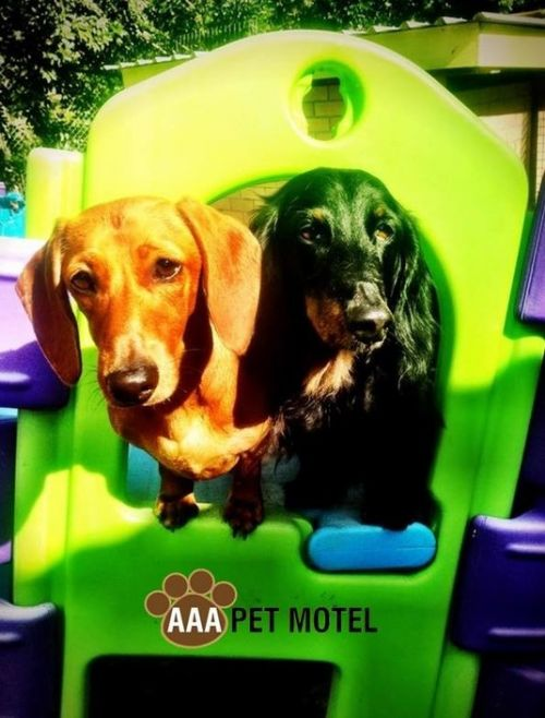 AAA Pet Motel - Accommodation Coffs Harbour