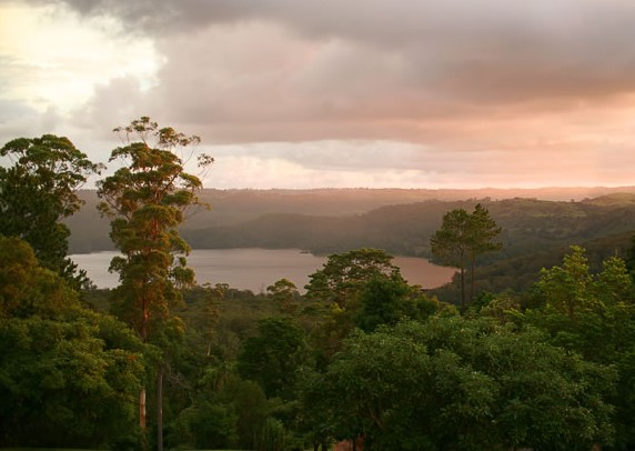 Montville Misty View Cabins - Accommodation Coffs Harbour