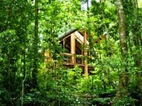 Fur'N'Feathers Rainforest Tree Houses - Accommodation Coffs Harbour