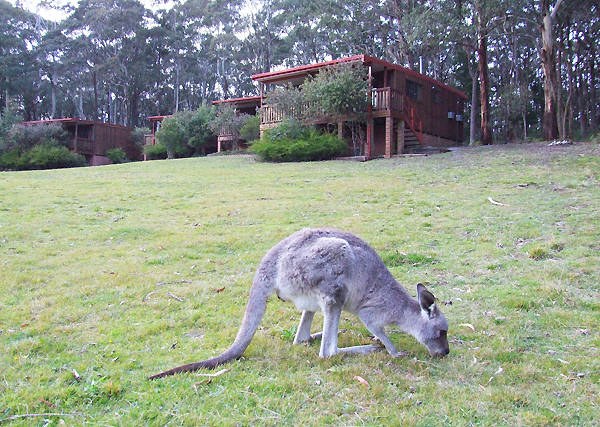 Jenolan Caves Cottages - Accommodation Coffs Harbour