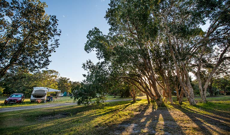 Delicate campground - Accommodation Coffs Harbour