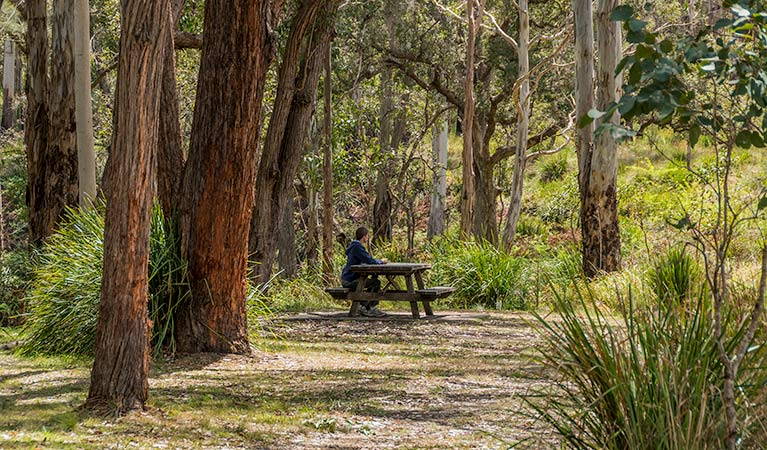 Koreelah Creek campground - Accommodation Coffs Harbour