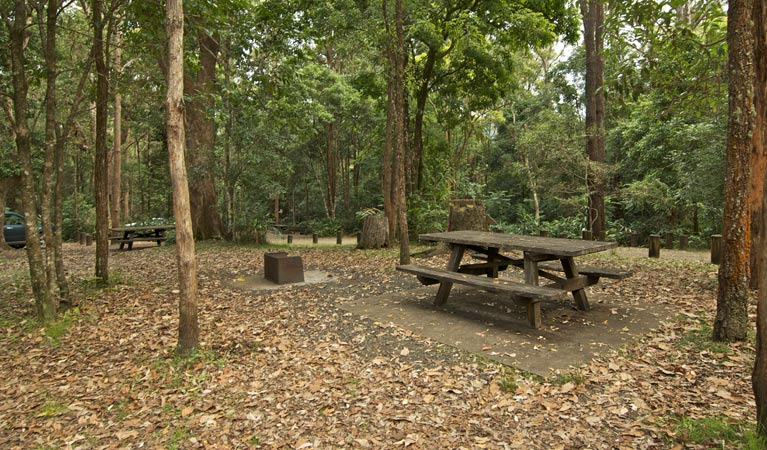 Sheepstation Creek campground - Accommodation Coffs Harbour