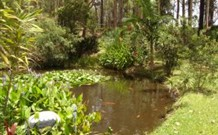 Tallowood Ridge B and B - Accommodation Coffs Harbour
