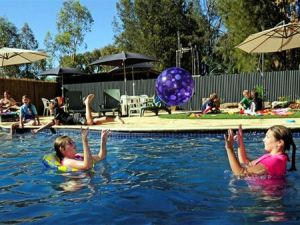 Kingston On Murray Caravan Park - Accommodation Coffs Harbour