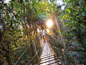 O'Reilly's Rainforest Retreat - Accommodation Coffs Harbour