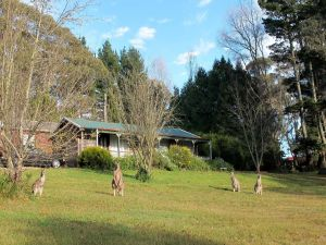 Cedar Lodge Cabins - Accommodation Coffs Harbour