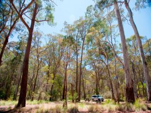Coolah Tops National Park Camping - Accommodation Coffs Harbour