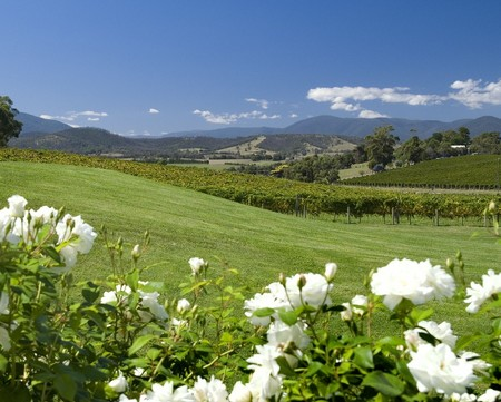 Balgownie Estate Vineyard Resort and Spa - Accommodation Coffs Harbour