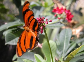 Butterfly Farm - Accommodation Coffs Harbour