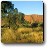 Uluru - Kata Tjuta National Park - Accommodation Coffs Harbour