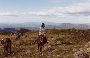 High Country Horses - Accommodation Coffs Harbour
