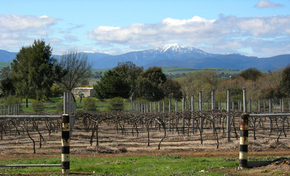 Buller View Wines - Accommodation Coffs Harbour