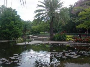 Brisbane City Botanic Gardens - Accommodation Coffs Harbour