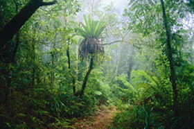 Lamington National Park and OReillys - Accommodation Coffs Harbour