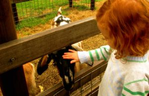Collingwood Children's Farm - Accommodation Coffs Harbour