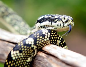 Reptile Encounters - Accommodation Coffs Harbour