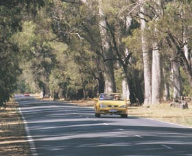 Ludlow Tuart Forest - Accommodation Coffs Harbour