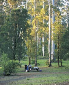 Big Brook Arboretum - Accommodation Coffs Harbour