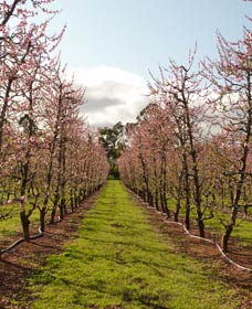 Raeburn Orchards - Accommodation Coffs Harbour