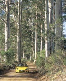 Mount Shadforth Scenic Drive - Accommodation Coffs Harbour