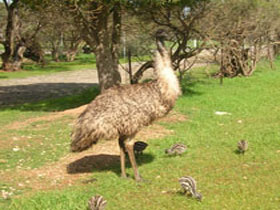 Minlaton Fauna Park - Accommodation Coffs Harbour