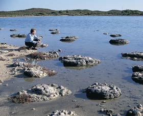 Lake Thetis Stromatolites - Accommodation Coffs Harbour