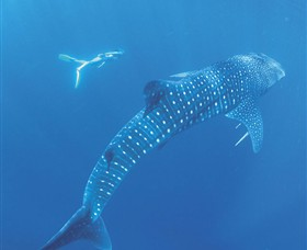 Ningaloo Marine Park - Accommodation Coffs Harbour