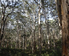 Boranup Karri Forest - Accommodation Coffs Harbour