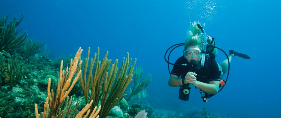 Coastal Water Dive - Accommodation Coffs Harbour