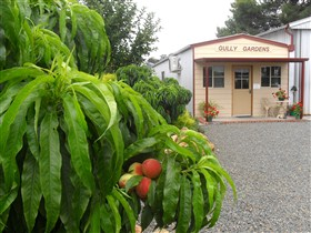 Gully Gardens - Accommodation Coffs Harbour