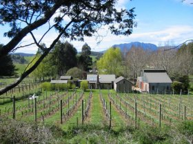 Wilmot Hills Vineyard - Accommodation Coffs Harbour
