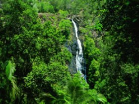 Kondalilla National Park - Accommodation Coffs Harbour