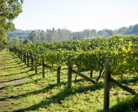 Surveyor's Hill Vineyards - Accommodation Coffs Harbour