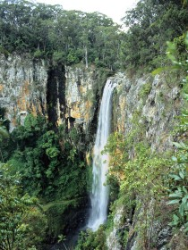 Gondwana Rainforests of Australia - Accommodation Coffs Harbour
