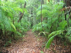 Delicia Road Conservation Park - Accommodation Coffs Harbour