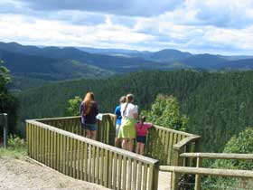 Kenilworth Forest Reserve - Accommodation Coffs Harbour