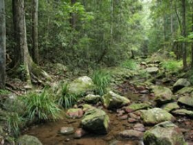 Amamoor State Forest - Accommodation Coffs Harbour