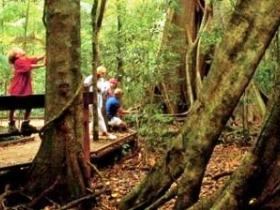 Mary Cairncross Scenic Reserve - Accommodation Coffs Harbour