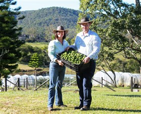 Hinterland Feijoas - Accommodation Coffs Harbour