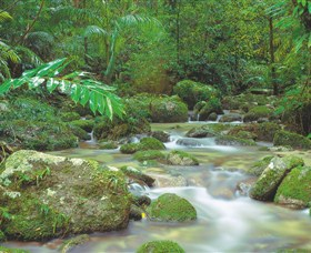 Mossman Gorge Daintree National Park