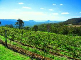 Preston Peak Wines - Accommodation Coffs Harbour