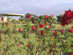 Elizabeth Park Rose Gardens - Accommodation Coffs Harbour