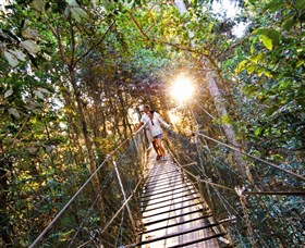 Tree Top Walkway - Accommodation Coffs Harbour