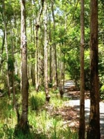 Hallorans Hill - Accommodation Coffs Harbour
