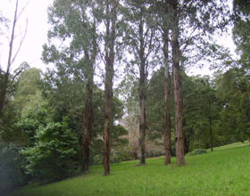 Mount Dandenong Arboretum - Accommodation Coffs Harbour